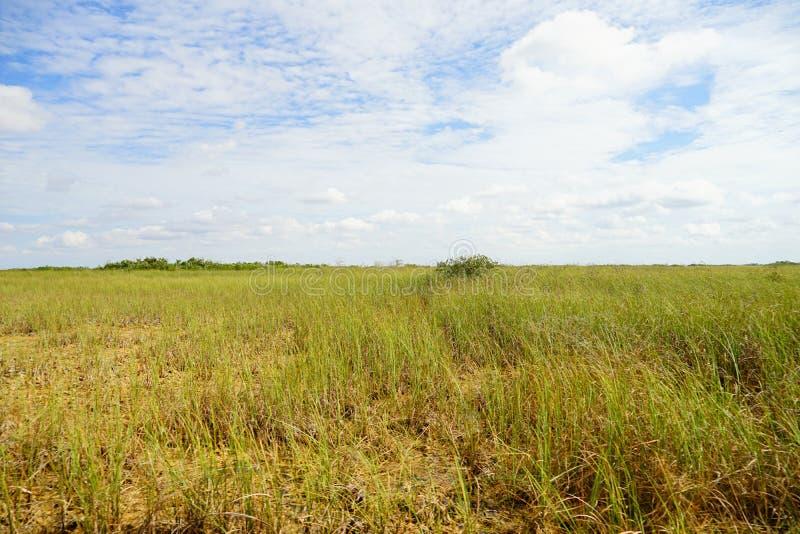 草原在沼泽地国立公园 库存照片