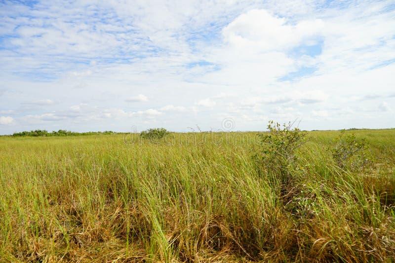 草原在沼泽地国立公园 图库摄影