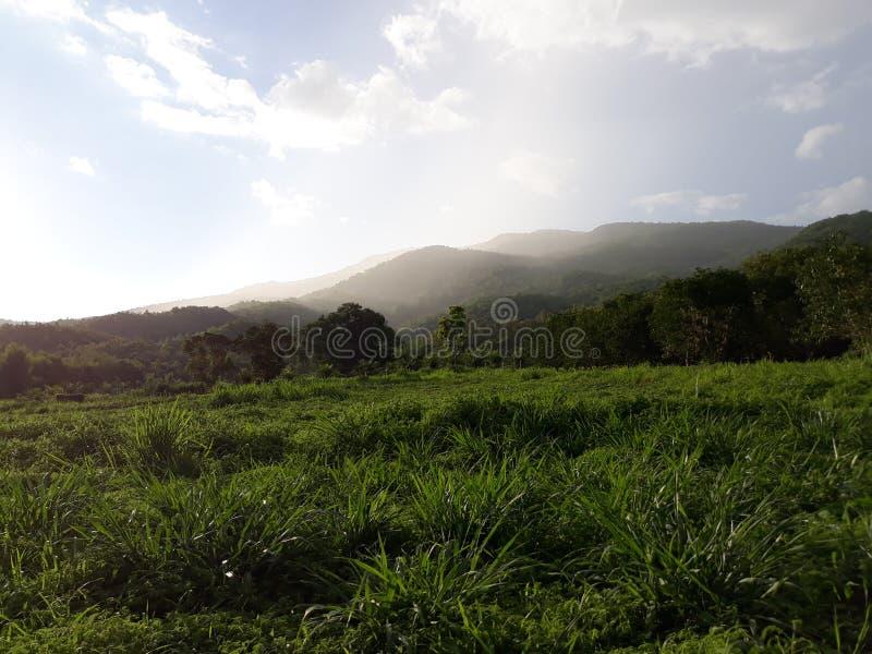 草原在清迈泰国 免版税库存图片