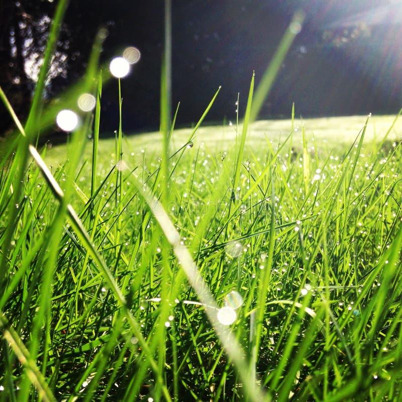 绿草后院 免版税库存照片