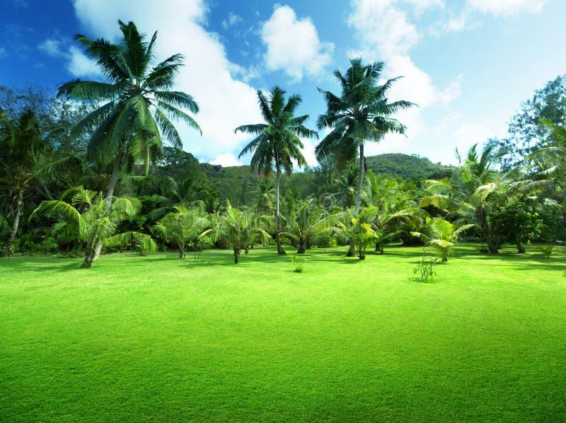 草和可可椰子的领域在普拉兰岛海岛上 免版税图库摄影