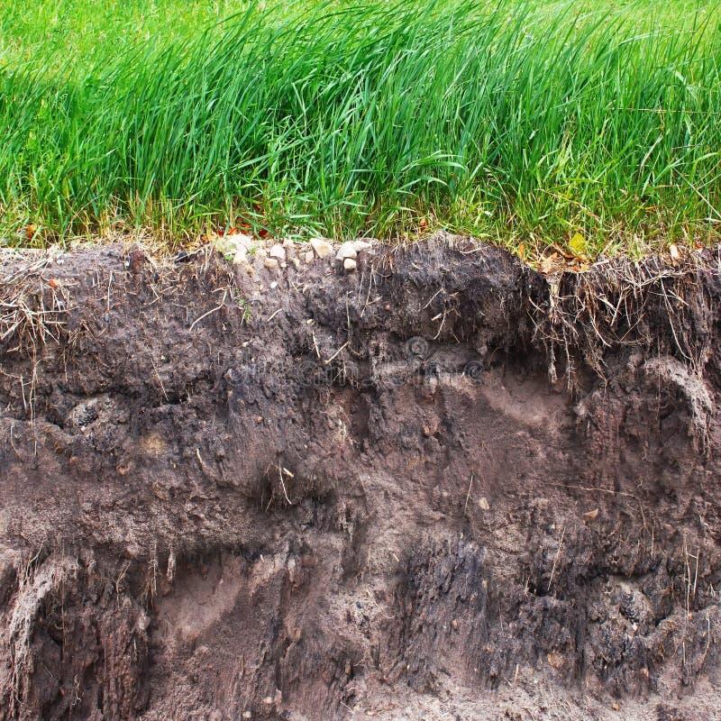 草和土壤 免版税库存照片