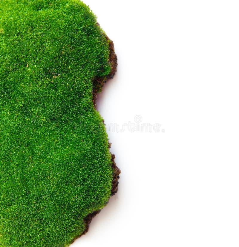 绿草和土壤 图库摄影