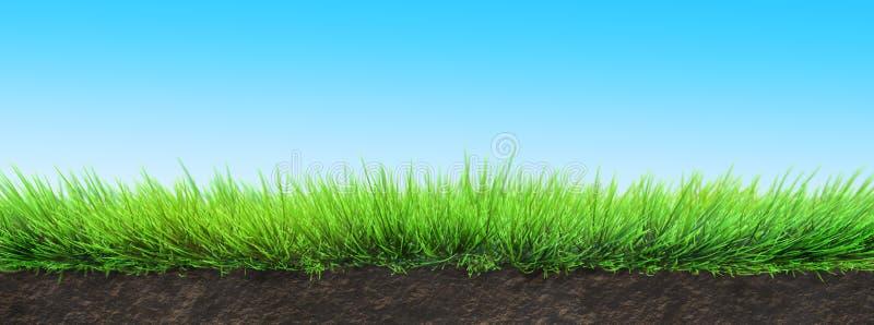草和土壤 图库摄影