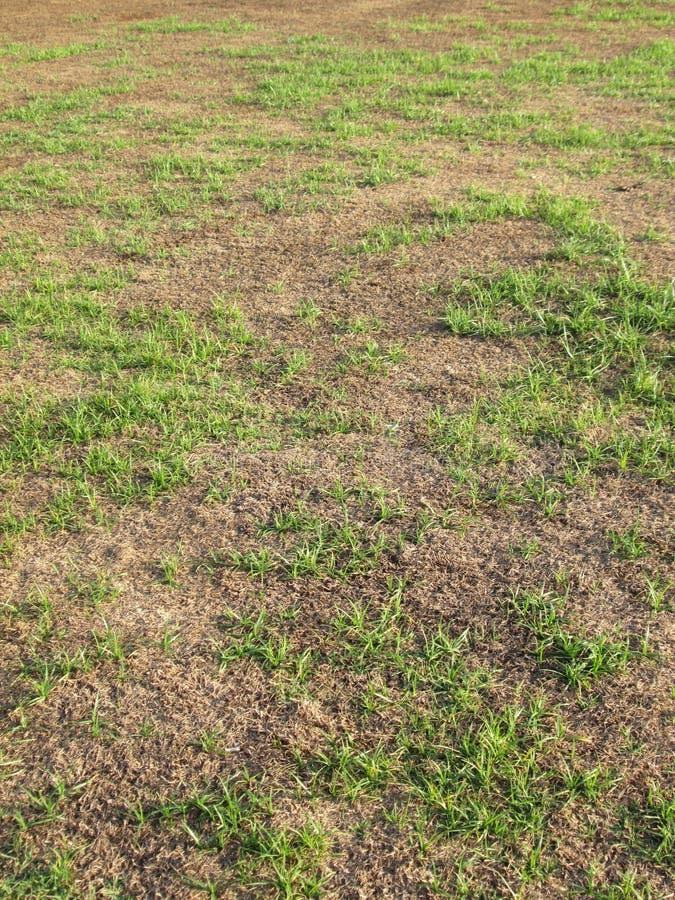 绿草和干草与早晨点燃 免版税库存照片