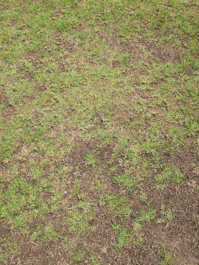 绿草和干草 免版税库存照片