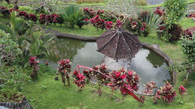 草和异乎寻常的植物包围的池塘 免版税库存照片