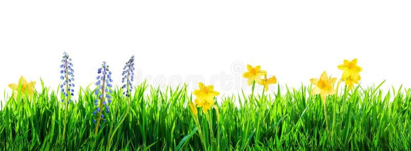 草和春天花背景 免版税图库摄影