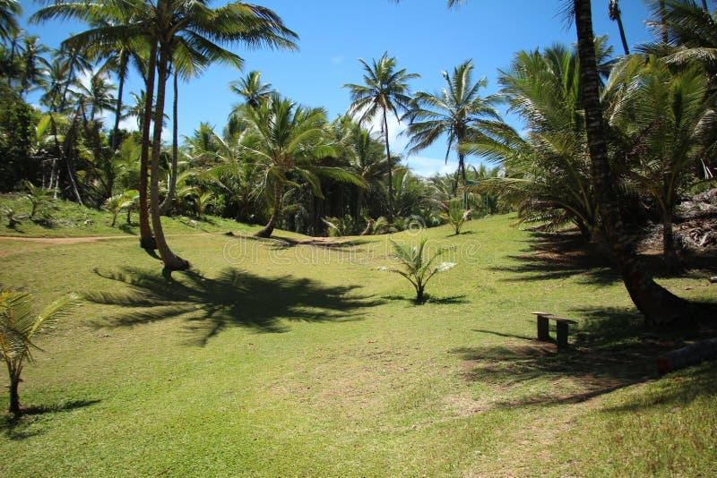 草和椰子树 库存图片