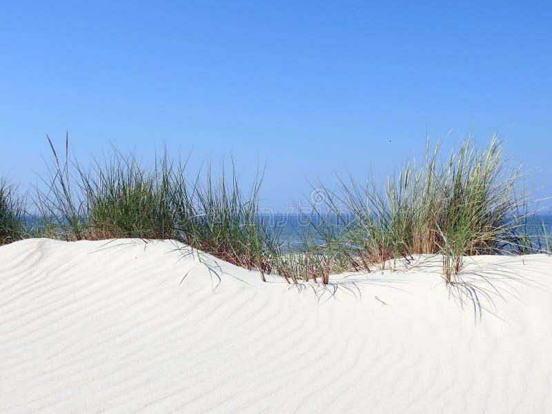 草和沙子在波罗的海海岸,立陶宛 免版税库存照片