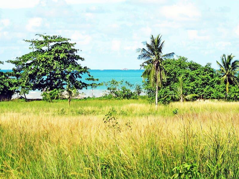草和海滩 免版税库存照片