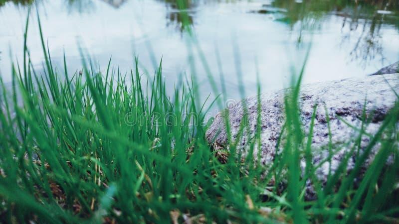 草和石头在湖附近 免版税库存照片