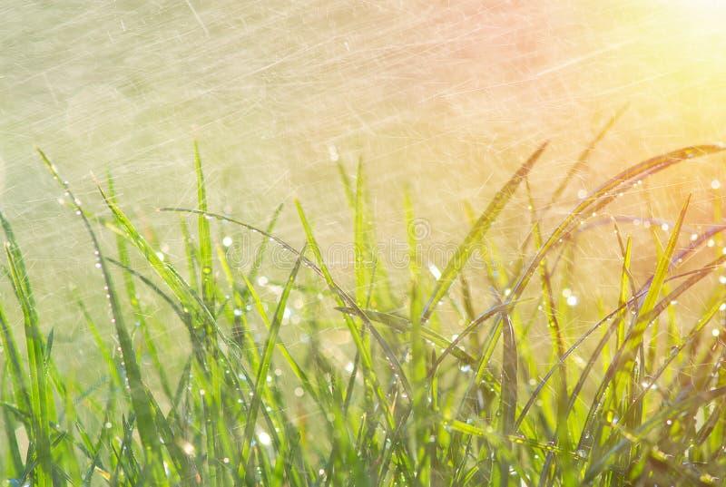 草和花在日出 免版税库存图片