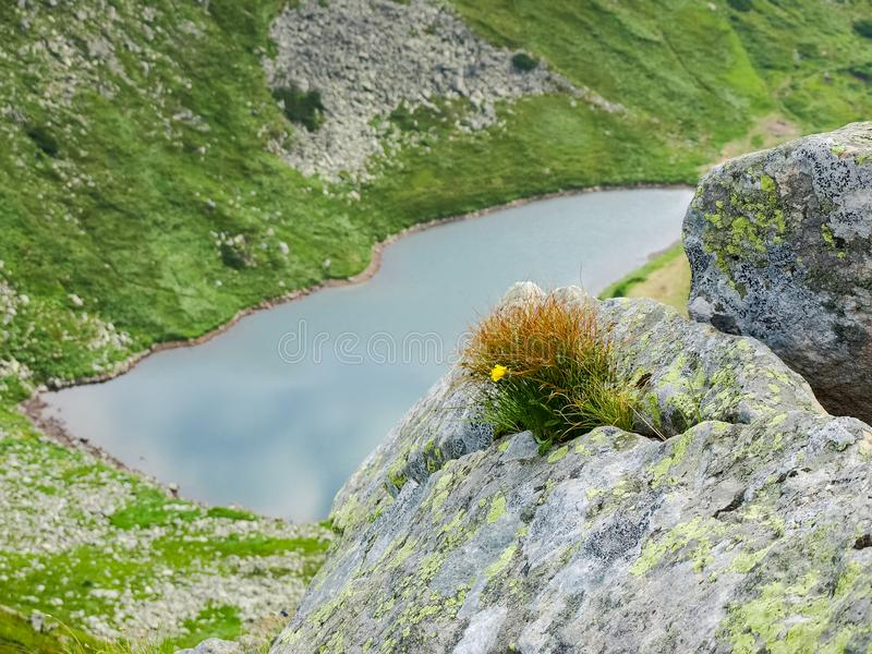 草和花在石裂缝在湖山的 免版税库存图片