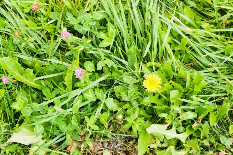 草和花 免版税图库摄影