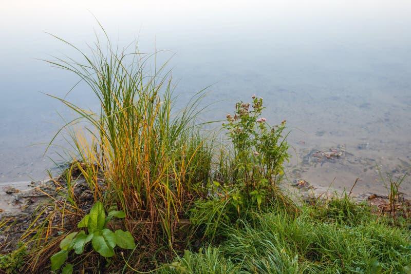 草和草本在江边 库存照片
