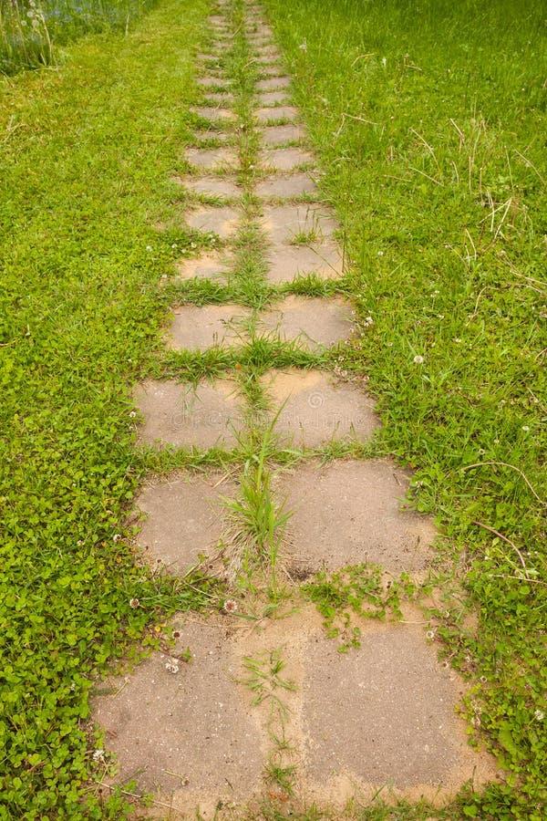 草和蚁丘在水泥板材轨道在庭院里 库存照片