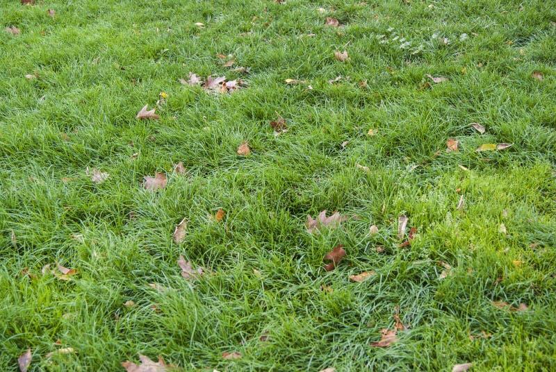 绿草和褐色叶子背景样式 免版税库存照片