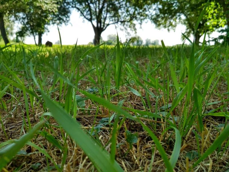 草和结构树 免版税库存照片