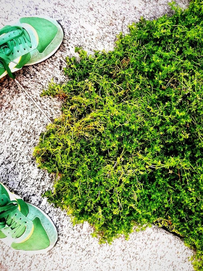 绿草和绿色运动鞋 库存照片