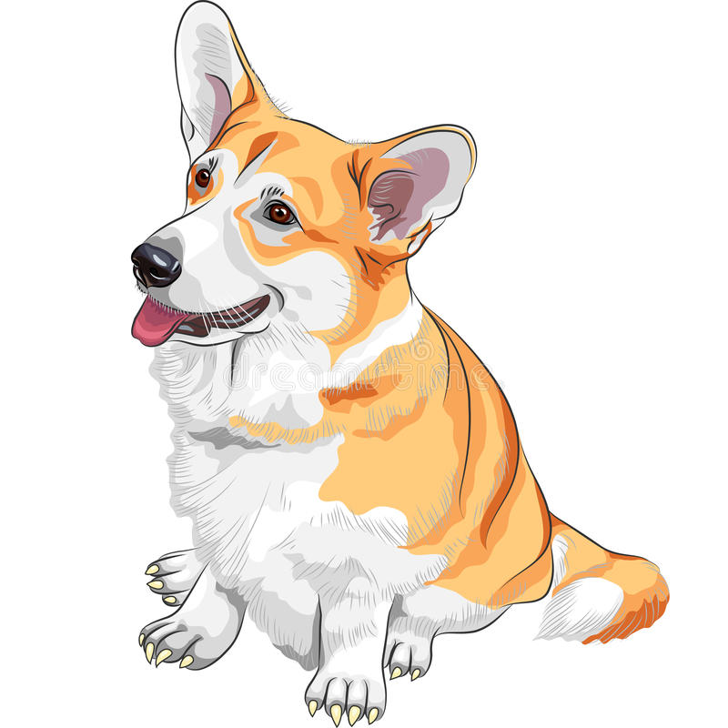 草图狗Pembroke威尔士小狗微笑 皇族释放例证