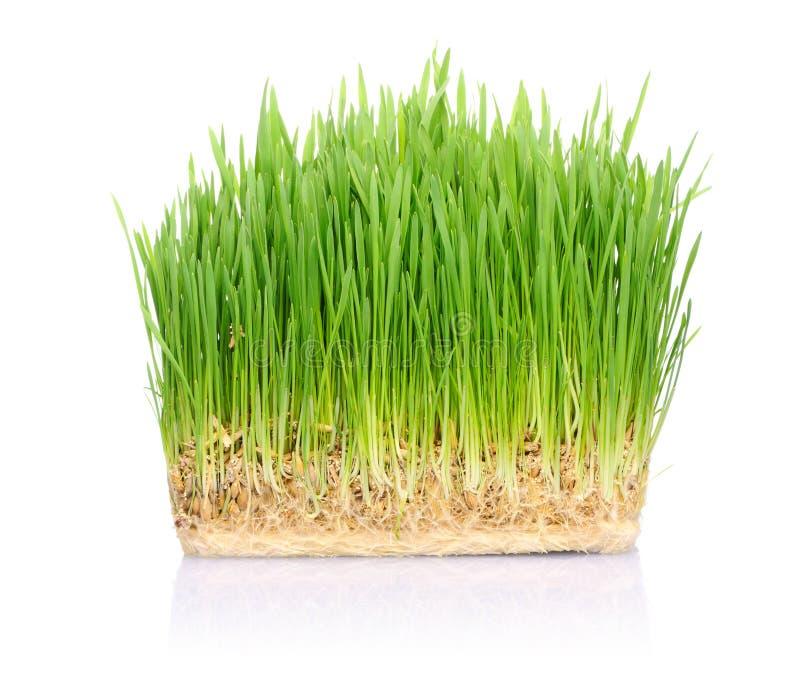 草土壤 免版税库存图片