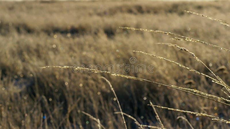 草在冬天,澳大利亚北部凋枯并且结冰 库存图片