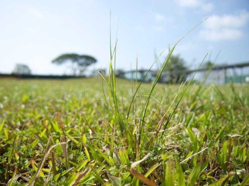 草在新加坡 免版税库存照片
