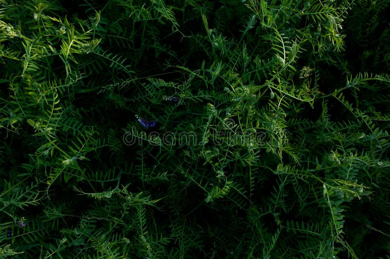 草地开花深绿的背景 热带丛林 植物群神奇世界  花卉秘密森林抽象 免版税图库摄影