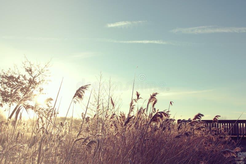 草地早熟禾和reet在一条小小河与一个木桥在一个明亮和晴朗的冬日 库存照片