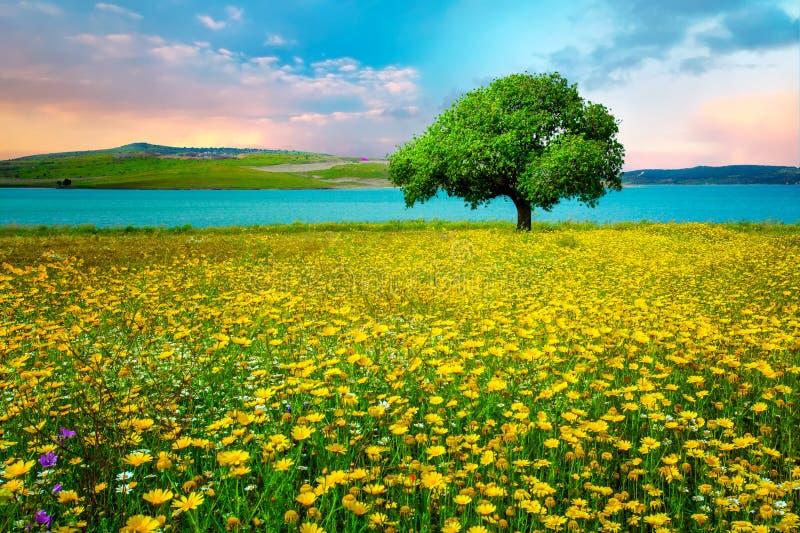 草地早熟禾风景和一棵唯一树伊兹密尔/Sakran/阿利亚加/土耳其 免版税库存图片