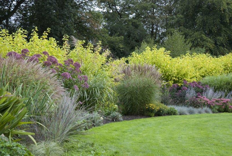 草坪在英国开花的庭院里 免版税图库摄影
