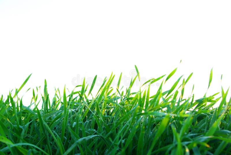 草坪白色 免版税库存照片