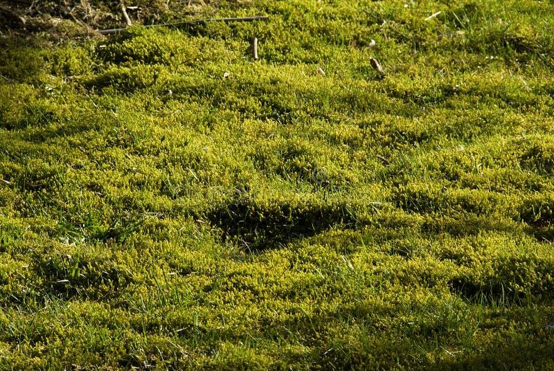 草坪青苔泥煤 免版税图库摄影