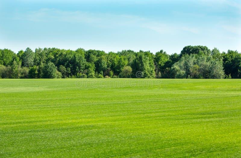 草坪gras领域 免版税库存照片