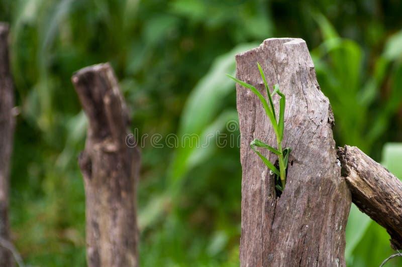 草增长在射线外面 图库摄影
