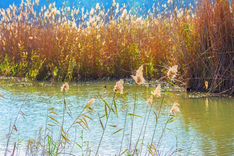 草密集的丛林  图库摄影