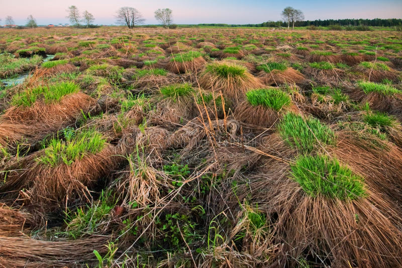 草小丘在领域的 免版税库存图片
