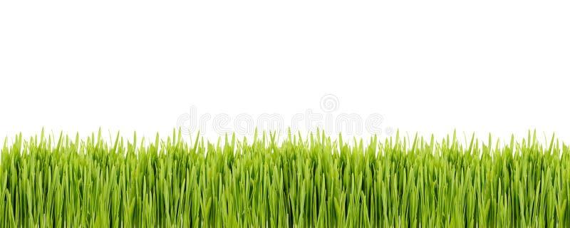 绿草小条在白色背景的 免版税库存照片