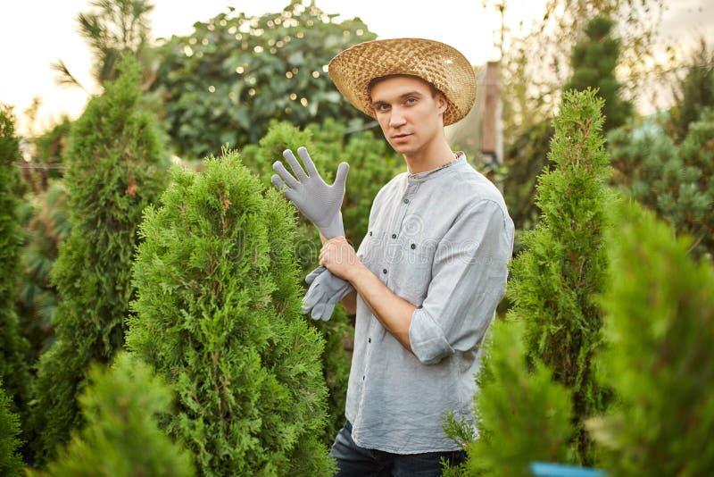 草帽的人花匠在他的手上把庭院手套放在有很多thujas的托儿所庭院在一温暖晴朗 库存照片