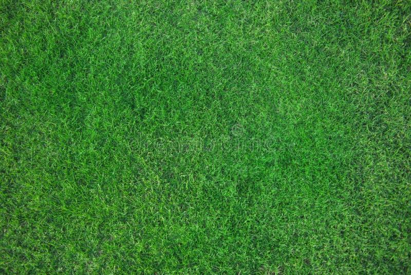 绿草新鲜的床  免版税库存照片