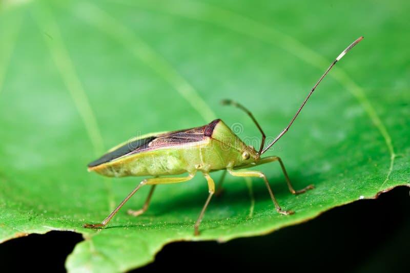 绿草昆虫 图库摄影