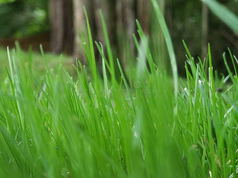 草是更加绿色的 免版税库存照片