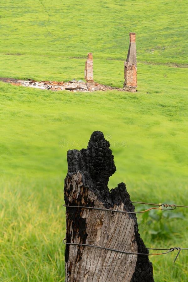 草木茂盛的绿草取代了丛林大火后的科巴戈的烧田 库存照片