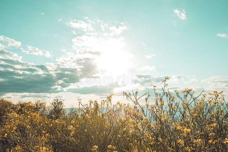 草本和天空基于的纹理 图库摄影