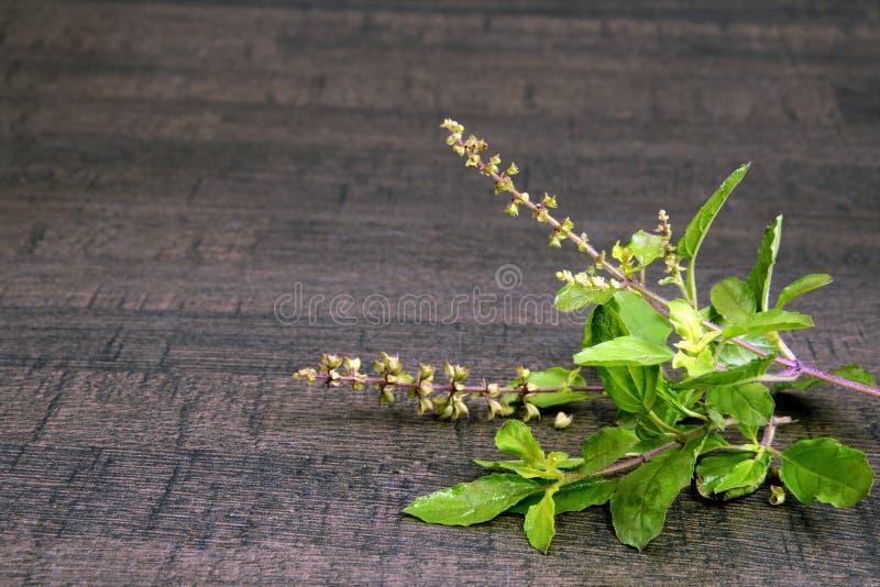草本和木灰浆的圣洁蓬蒿或Tulsi女王/王后 免版税库存图片