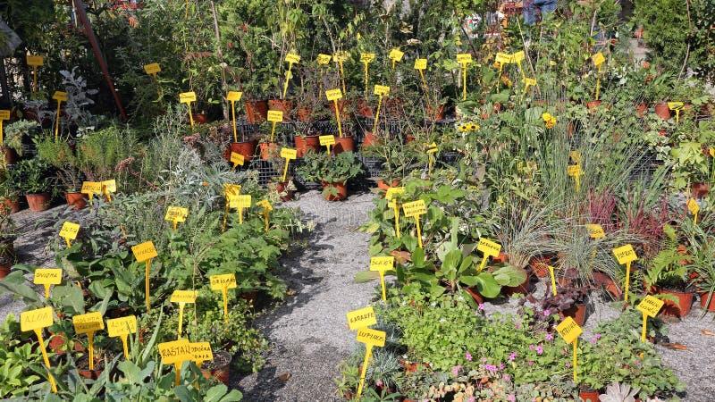 草本和香料植物 免版税库存照片