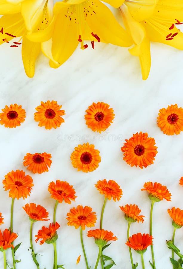 草本在轻的背景的金盏草officinalis与黄色百合 库存照片
