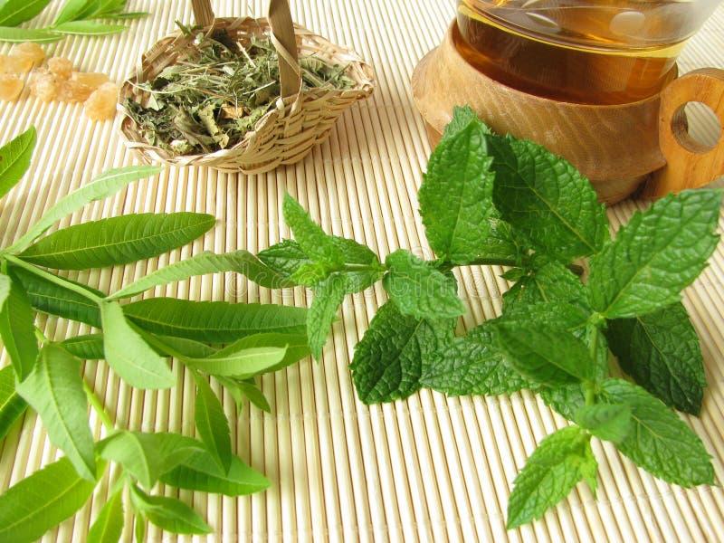 草本柠檬薄荷摩洛哥茶马鞭草属植物 免版税库存图片