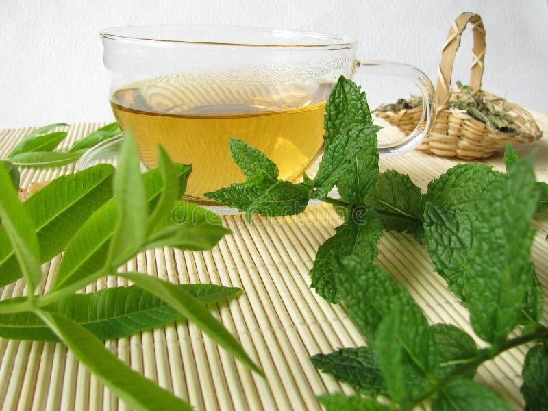 草本柠檬薄荷摩洛哥茶马鞭草属植物 免版税库存照片
